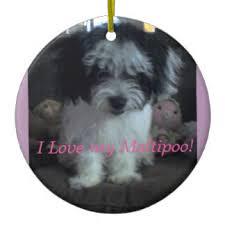 maltipoo ornaments keepsake ornaments zazzle