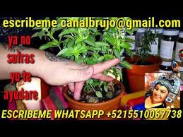 imágenes sorprendentes para whatsapp siembra dinero en esta planta y sorprendente ayuda espiritual
