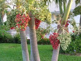 christmas tree palm christmas lights decoration