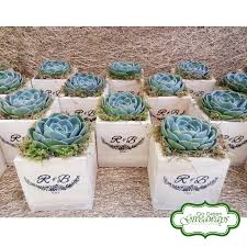 succulent wedding favors echeveria imbricata succulent wedding favor go green giveaways