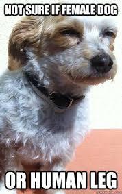 Confused Dog Meme - not sure if female dog or human leg confused dog quickmeme