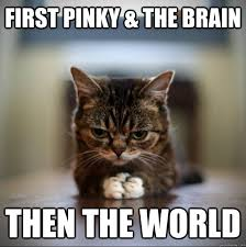 Pinky And The Brain Meme - first pinky the brain then the world world domination kitty