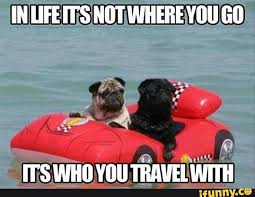 travel meme images It pugs me how cute this is travel made simple jpg