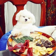 Dogs At Dinner Table 17 Dogs Who Just Used Thanksgiving To Warm Up For Christmas Dinner