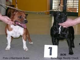 american pitbull terrier z hter deutschland news 2009