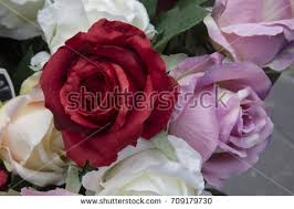 White Roses For Sale Roses At Flower Stalls Stock Images Royalty Free Images U0026 Vectors