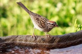bird baths myths and facts
