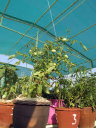 Shade Cloth Protecting Your Plants by Plant Care Archives Terrace Gardening The Organic Way