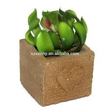 outdoor ornamental plant outdoor ornamental plant suppliers and