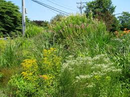native prairie plants landscapes situations using native plants native plant associates