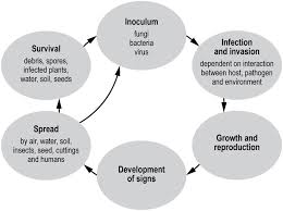 Plant Diseases Caused By Microorganisms - australian centre for international agricultural research