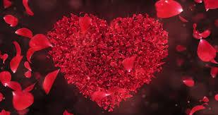 romantic flying red rose flower petals love heart wedding