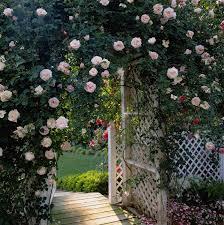Pretty Garden Ideas Pretty Backyards Home Interiror And Exteriro Design Home