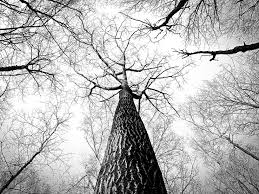 free images branch winter black and white bark high twig