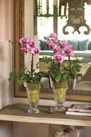 best indoor houseplants southern living