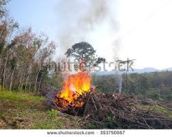 logs rubber tree stock images royalty free images vectors
