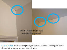 light bed bug infestation bed bug on ceiling got bed bugs bedbugger forums