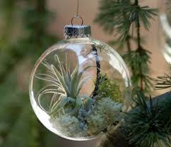 live terrarium with air plant inside a glass ornament home