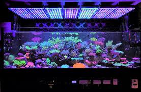 Led Aquarium Lighting Aquarium Led Lighting Photos Reef And Planted Aquarium Gallery Orphek