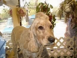 pet grooming the good the bad u0026 the furry mohawk