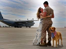 adopting a military dog important tips you should know