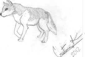 my wolf pencil drawing by raposa on deviantart