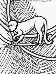free coloring page of the rainforest rainforest plants coloring pages page rainforest monkey coloring