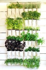 window hanging herb garden hanging wall planters indoor hanging