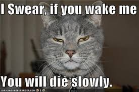 Morning People Meme - this is how i feel especially on the weekends morning people