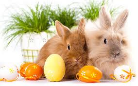 bunny easter easter bunnies desktop background hd 2880x1800 deskbg