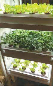 kitchen smart hydroponic kitchen garden system in simple methods