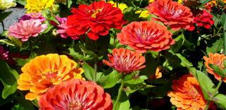 august lawn u0026 garden to do list today u0027s homeowner