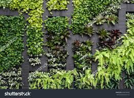 vertical garden green wall eco friendly vertical garden stock photo 534932050