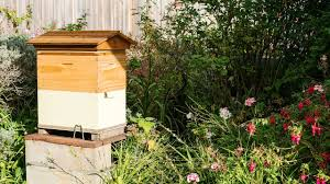 father and son beginner beekeeping team keep flow hive in suburban