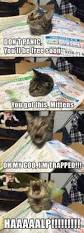 best 25 cute cats ideas on pinterest kittens adorable kittens