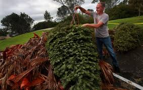 where to recycle your christmas tree the san diego union tribune