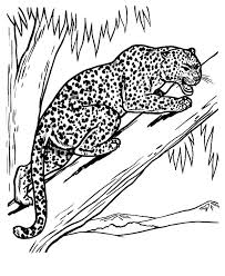 leopard feeling threaten coloring pages batch coloring