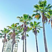 Texas travel blogs images Travel colorfully a guide to long beach vandi fair jpg