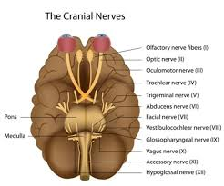 What Causes Blindness In Humans Neuromyelitis Optica Genetics Home Reference