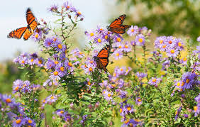 butterfly in flower garden jigsaw puzzle game puzzlemobi for