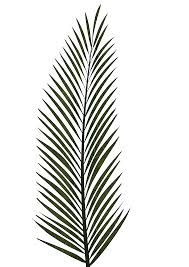 cp paurb palm leaf png textures and style u2013 radin mas