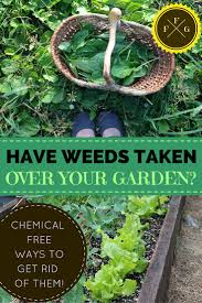 What Kind Of Mulch For Vegetable Garden by What To Do When Weeds Have Taken Over Your Garden