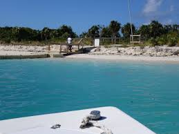 iguana island little water cay a visit with turks and caicos u0027 rock iguanas