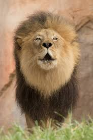 518 best san diego zoo safari park images on nature