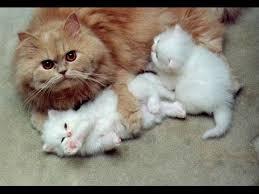beautiful kittens the most beautiful cat hug cat mom hugs kitten latest video