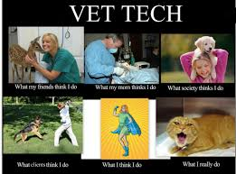 Vet Tech Memes - vet assistant just another day at work my style pinterest