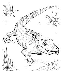 coloring pages reptile coloring pages for your childs reptile