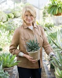 martha u0027s home decorating with houseplants martha stewart