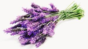 lavender flowers what lavender can do for you