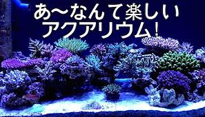 Aquascape Reef Japanese Reef Tank Archives Reef Builders The Reef And Marine